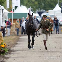 Click to view album: Veterinaire keuring Military Boekelo 2015